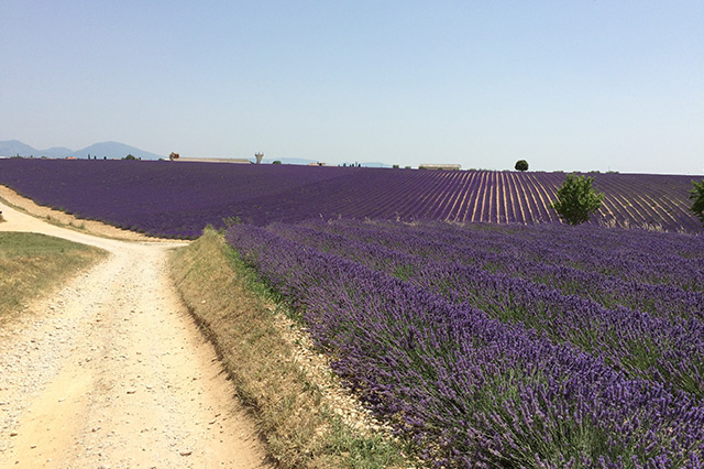 Top 15 tourist attractions in the world Provence, France